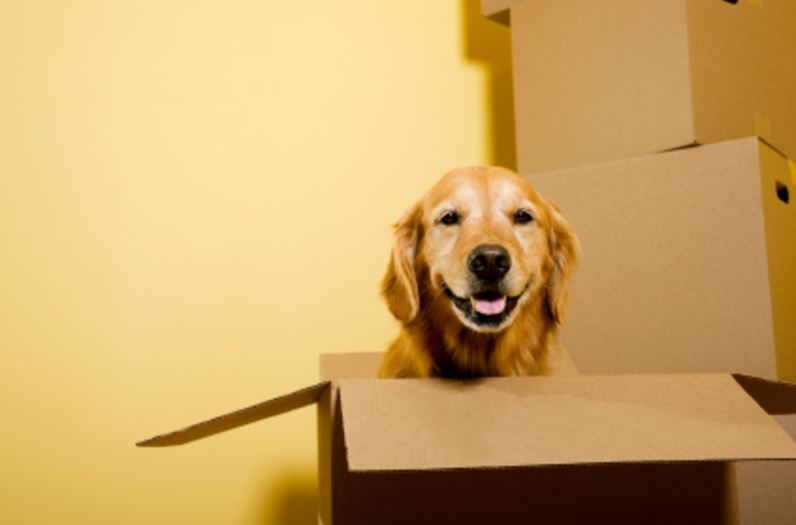 Moving Homes With Pets Tips